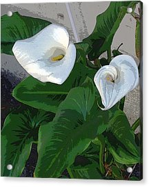 Lilies Of The Field Acrylic Print by Sally Stevens