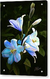Lilies Acrylic Print by Suni Roveto