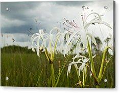 Lilies Thunder Acrylic Print