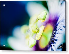 Lilikoi Passion Flower In Colourful Jewel Tones Acrylic Print