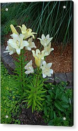 Acrylic Print featuring the photograph Lillies by Ferrel Cordle