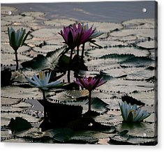 Lillies On The Lake Acrylic Print by Kimberly Camacho