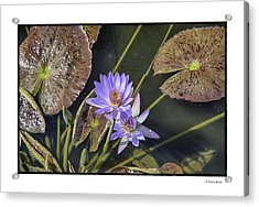 Acrylic Print featuring the photograph Lillies by R Thomas Berner