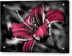 Acrylic Print featuring the photograph Lilly 3 by Michaela Preston
