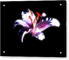 Lilly Flower  Acrylic Print