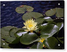 Lilly Acrylic Print