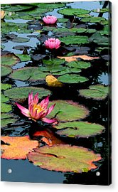 Lilly Pads Acrylic Print by Jan Cipolla