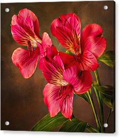 Lilly With Brushstrokes Acrylic Print by Mary Jo Allen