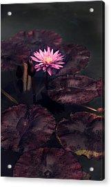 Moonlight Lily Acrylic Print by Jessica Jenney