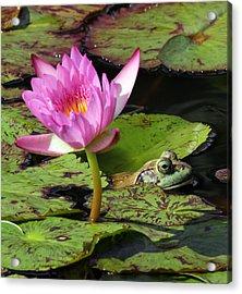 Lily And The Bullfrog Acrylic Print