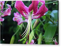 Lily At The Church Acrylic Print