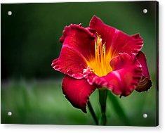 Lily Beauty Acrylic Print