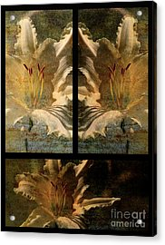 Lily Collage Acrylic Print by Lois Bryan