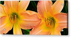Lily Duo Acrylic Print