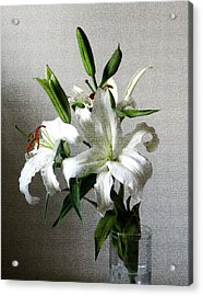 Lily Flower Acrylic Print