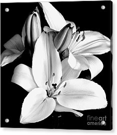 Lily Flower In Black And White Acrylic Print by Kimxa Stark