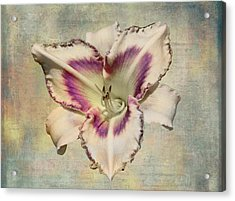 Lily For A Day Acrylic Print by Angela A Stanton
