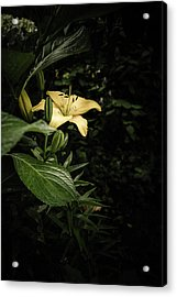 Acrylic Print featuring the photograph Lily In The Garden Of Shadows by Marco Oliveira