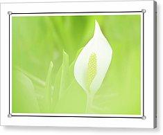 Lily In The Green Acrylic Print by Georgiana Romanovna