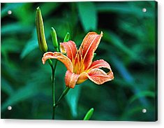 Acrylic Print featuring the photograph Lily In Woods by William Jobes