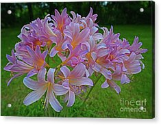 Lily Lavender Acrylic Print