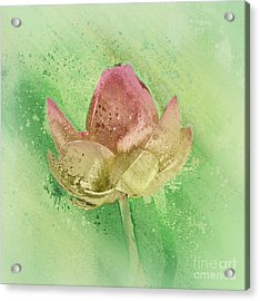 Acrylic Print featuring the mixed media Lily My Lovely - S112sqc88 by Variance Collections