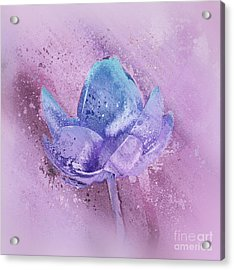 Acrylic Print featuring the digital art Lily My Lovely - S113sqc77 by Variance Collections
