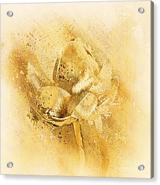 Acrylic Print featuring the digital art Lily My Lovely - S114sqc75v2 by Variance Collections