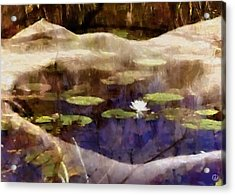 Lily Of The Pond Acrylic Print by Gun Legler