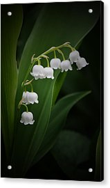 Lily Of The Valley 2 Acrylic Print