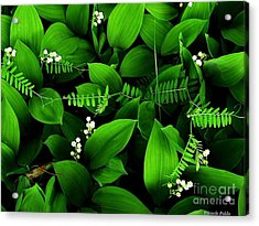 Lily Of The Valley Acrylic Print by Elfriede Fulda