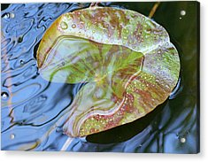 Lily Pad On The Pond Acrylic Print by Kerry Reed