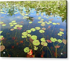 Lily Pads And Reflections Acrylic Print