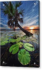 Lily Pads And Sunset Acrylic Print