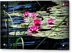 Lily Pads And Wildflowers Acrylic Print