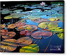 Lily Pads At Sunset Acrylic Print by Kaye Menner