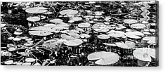 Lily Pads, Black And White Acrylic Print