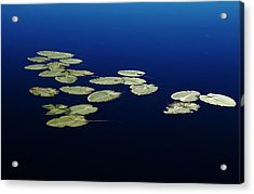 Acrylic Print featuring the photograph Lily Pads Floating On River by Debbie Oppermann