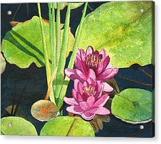 Lily Pads Acrylic Print by Sharon Farber