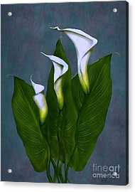 White Calla Lilies Acrylic Print by Peter Piatt