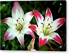 Acrylic Print featuring the photograph Lily Pink Reflections by LeeAnn McLaneGoetz McLaneGoetzStudioLLCcom