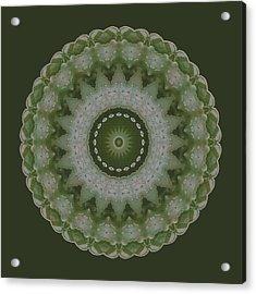 Lily Plaid Acrylic Print