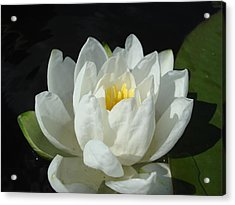 Acrylic Print featuring the photograph Lily Pond by Christie Minalga
