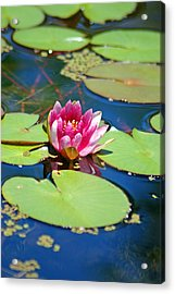 Lily Pond Acrylic Print by Donna Bentley