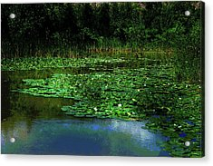 Lily Pond Acrylic Print by Elaine Manley