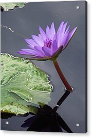 Lily Pond Acrylic Print by Eric  Schiabor