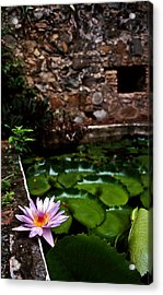 Lily Pond In Ruins. Usvi Acrylic Print