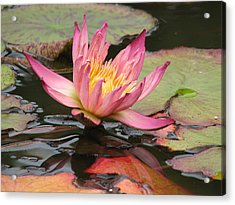 Lily Pond Acrylic Print by Jan Cipolla