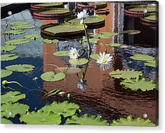 Lily Pond Reflections Acrylic Print by Suzanne Gaff