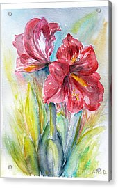 Lily Red Acrylic Print by Jasna Dragun